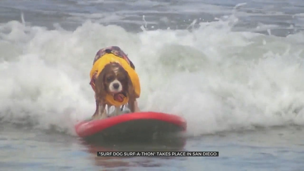 WATCH: Dog Beach holds Dog Surf-A-Thon