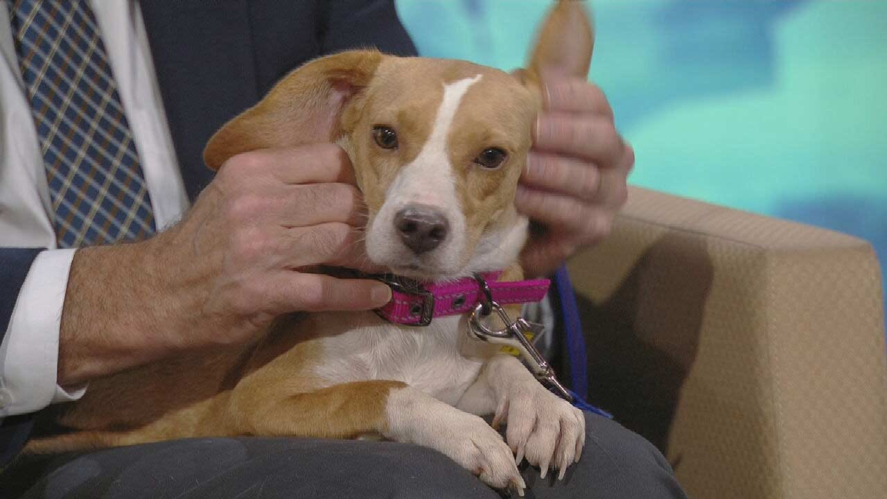 Beaglejuice: News On 6 Pet Of The Week For 9-6-2019