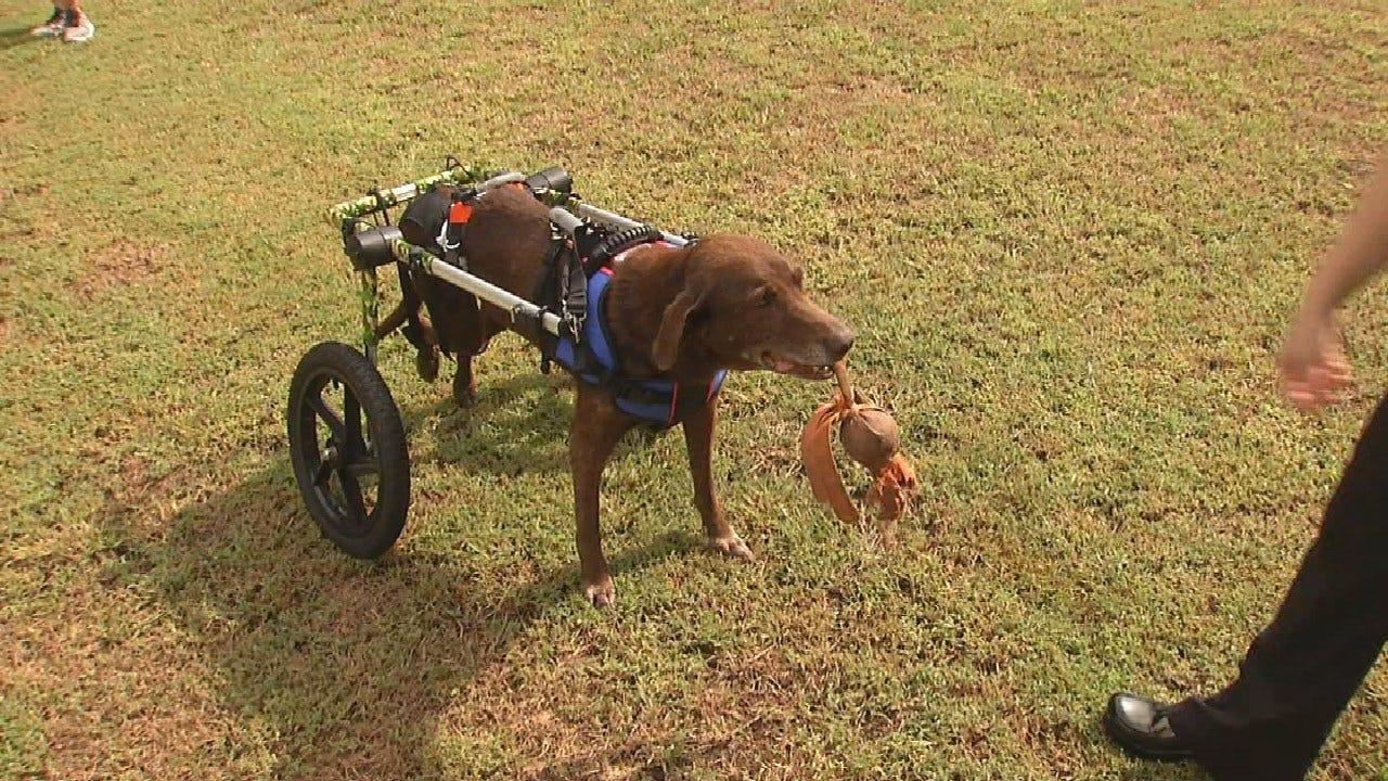 Skiatook Group Helps Rescue Dog Walk Again