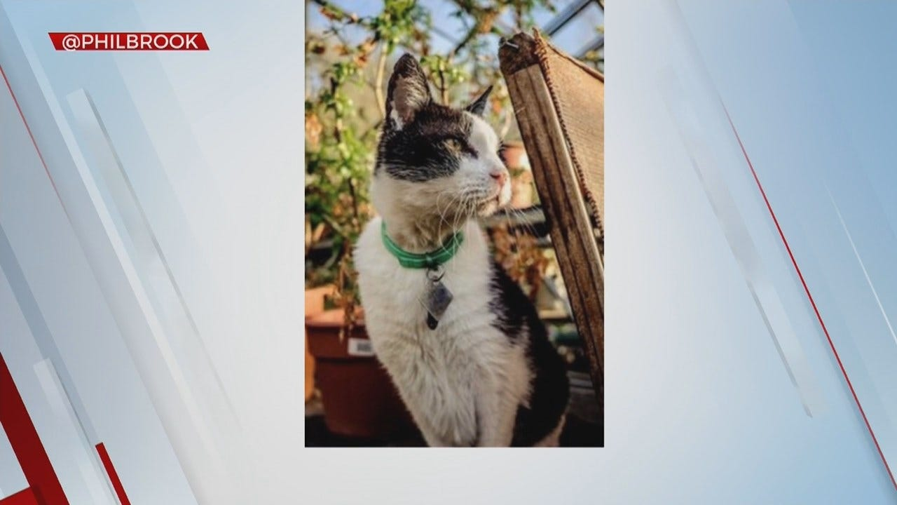 Tulsa's Philbrook Museum Releasing Book Of Their Cats