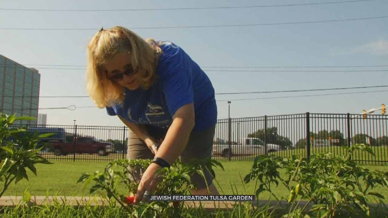 Jewish Federation Of Tulsa's Community Garden Used To Raise Food & Awareness