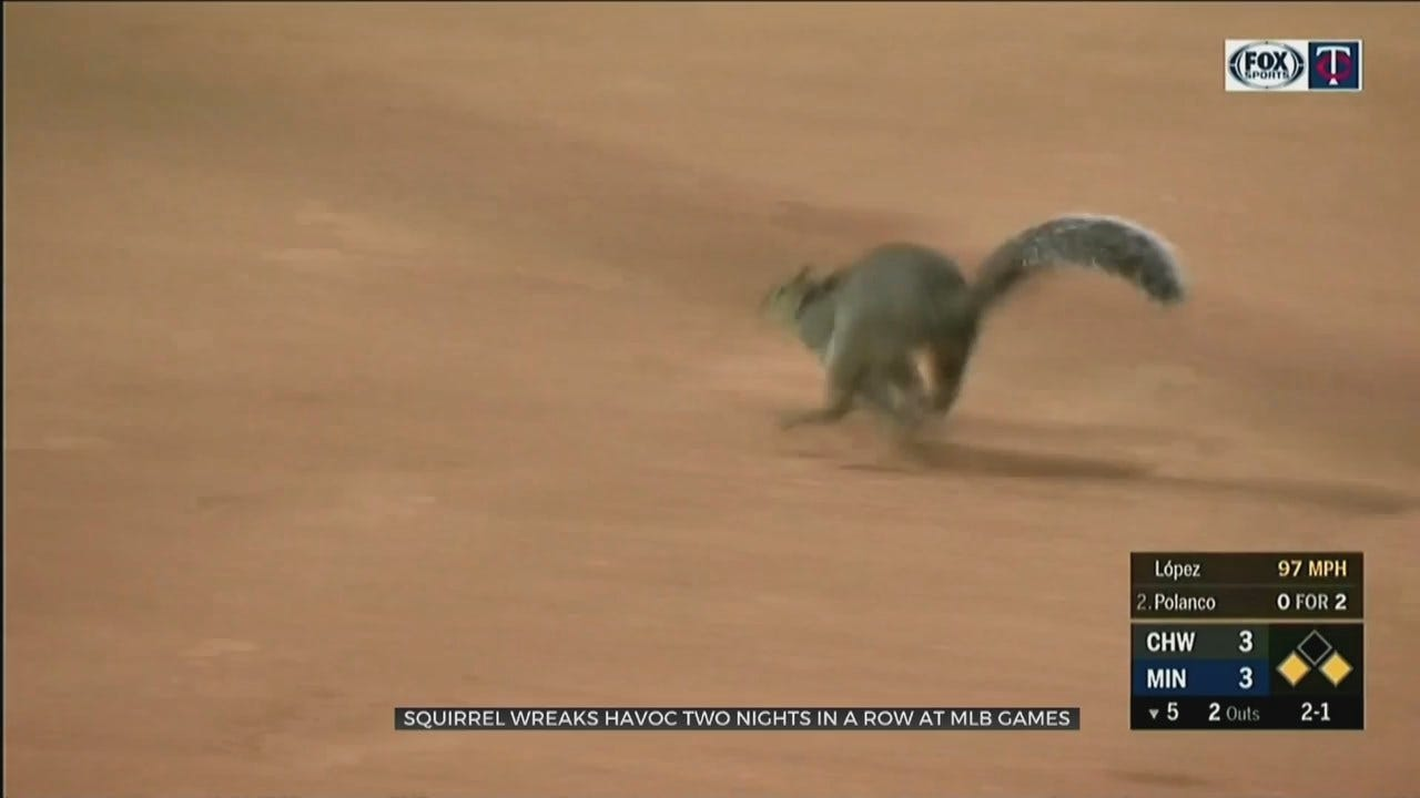 WATCH: Squirrel Causes Baseball Game Delays