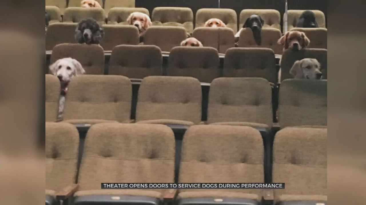 WATCH: Service Dogs Enjoy Day At The Theater