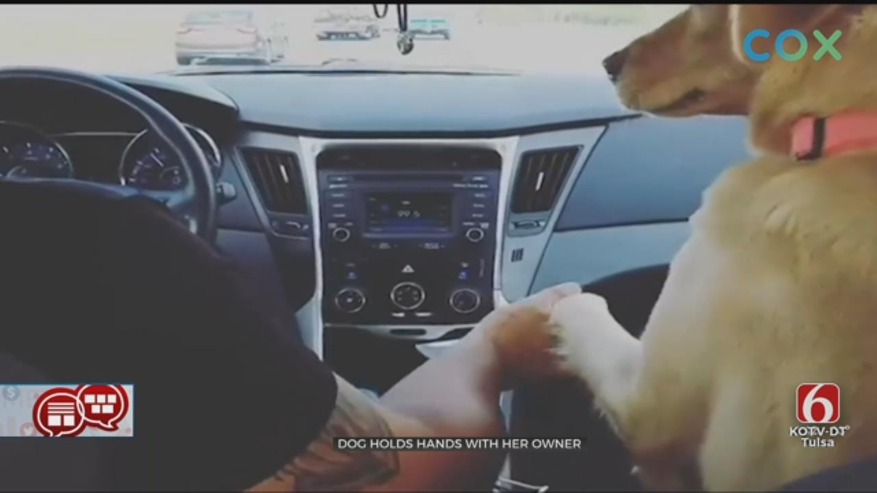 Something To Talk About: Front Seat Dog