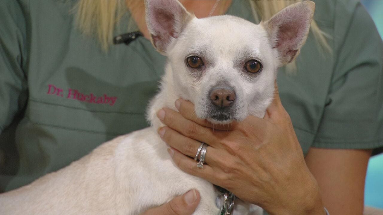 Ravioli: News On 6 Pet Of The Week For 8-9-19
