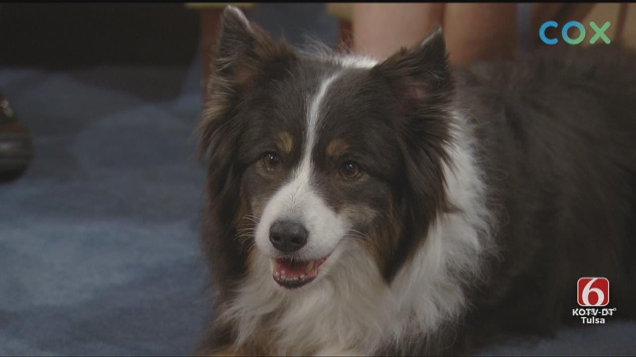 Ask Our Expert: K9 Manners Expert Mary Green Answers Pet Questions