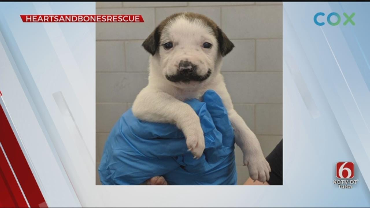 'Salvador Dolly:' Puppy With Fur Mustache Goes Viral