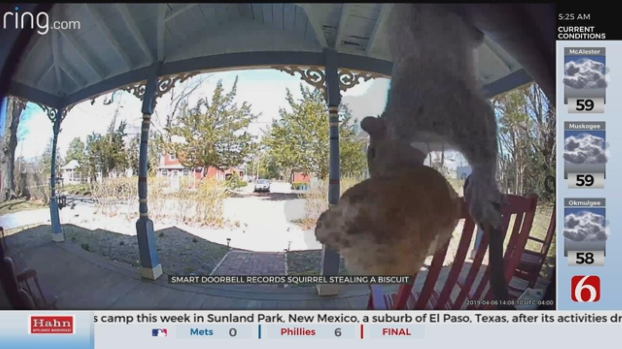 WATCH: Squirrel Takes Up Being A Porch Pirate