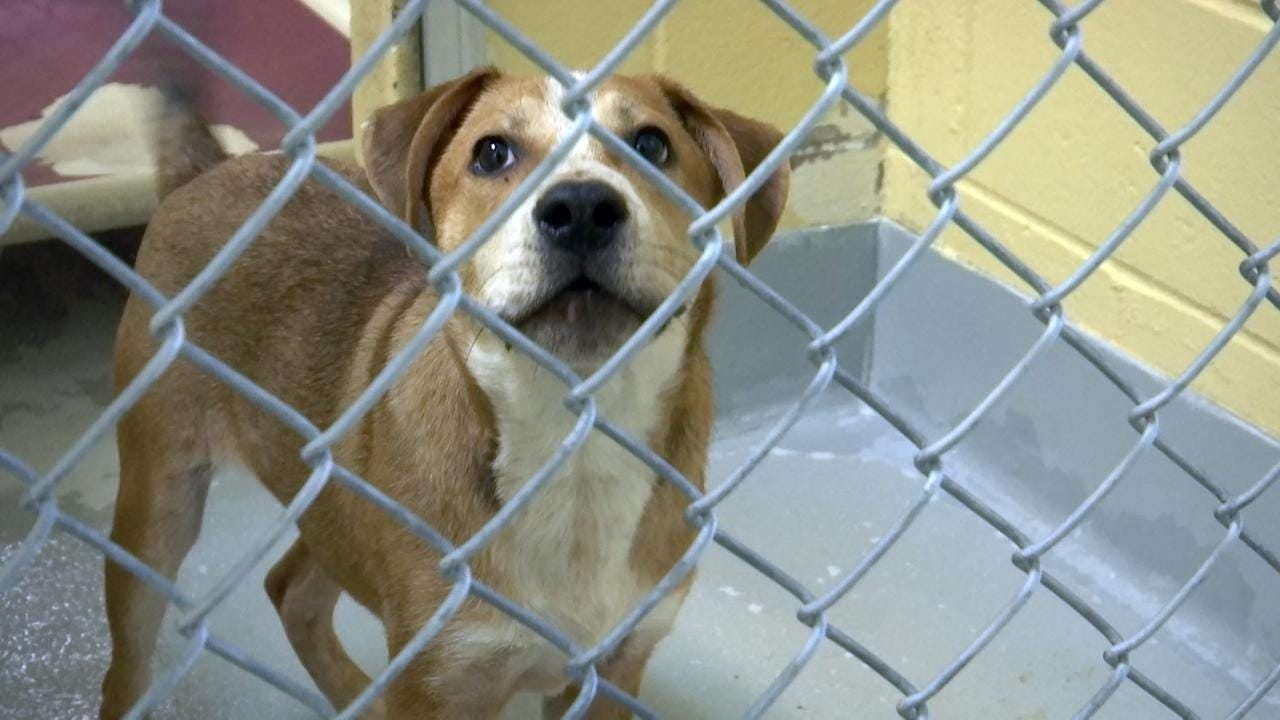 Tulsa Animal Welfare Hoping To Prevent Spread Of Distemper Virus