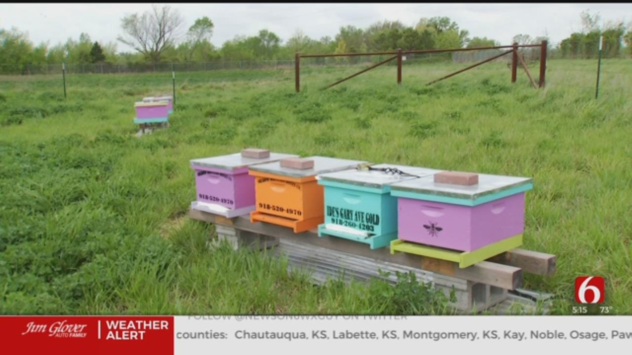Former Oklahoma 'Superfund' Site Now Home To Honey Bees