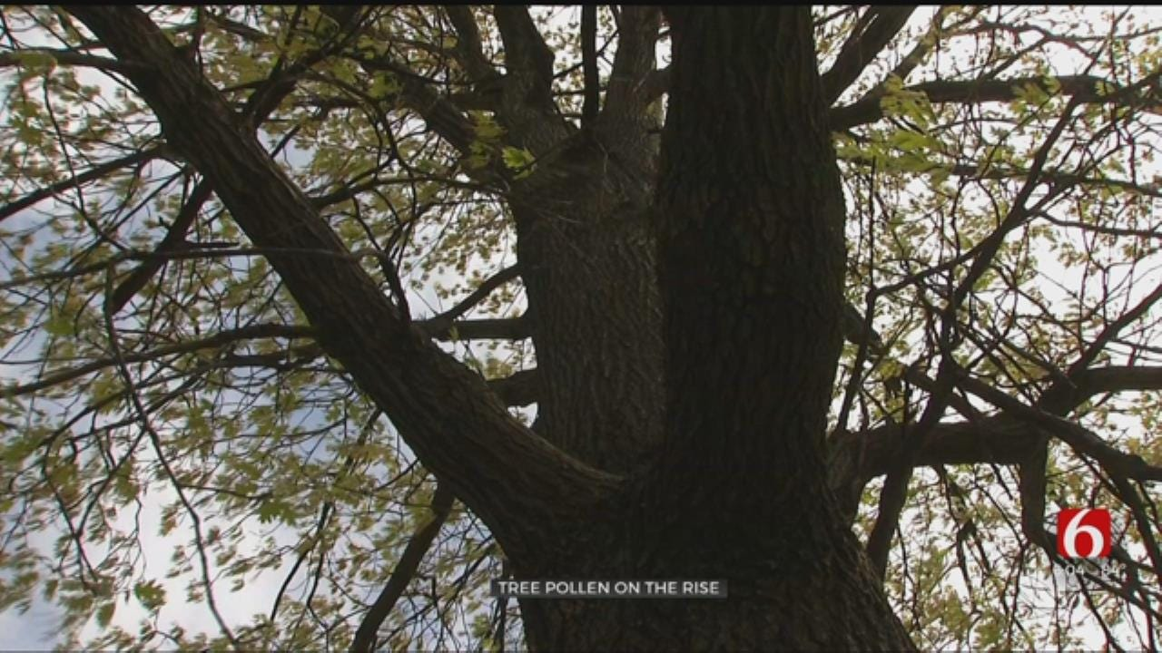 Tree Pollen On The Rise In Oklahoma