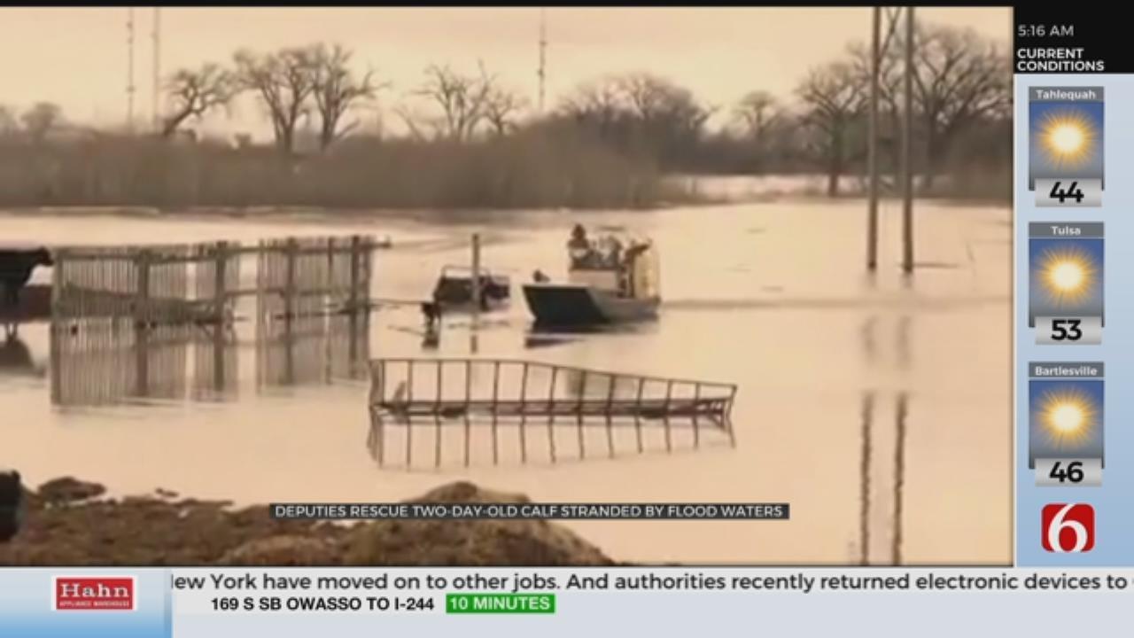 WATCH: Deputies Rescue Calf From Rising Water