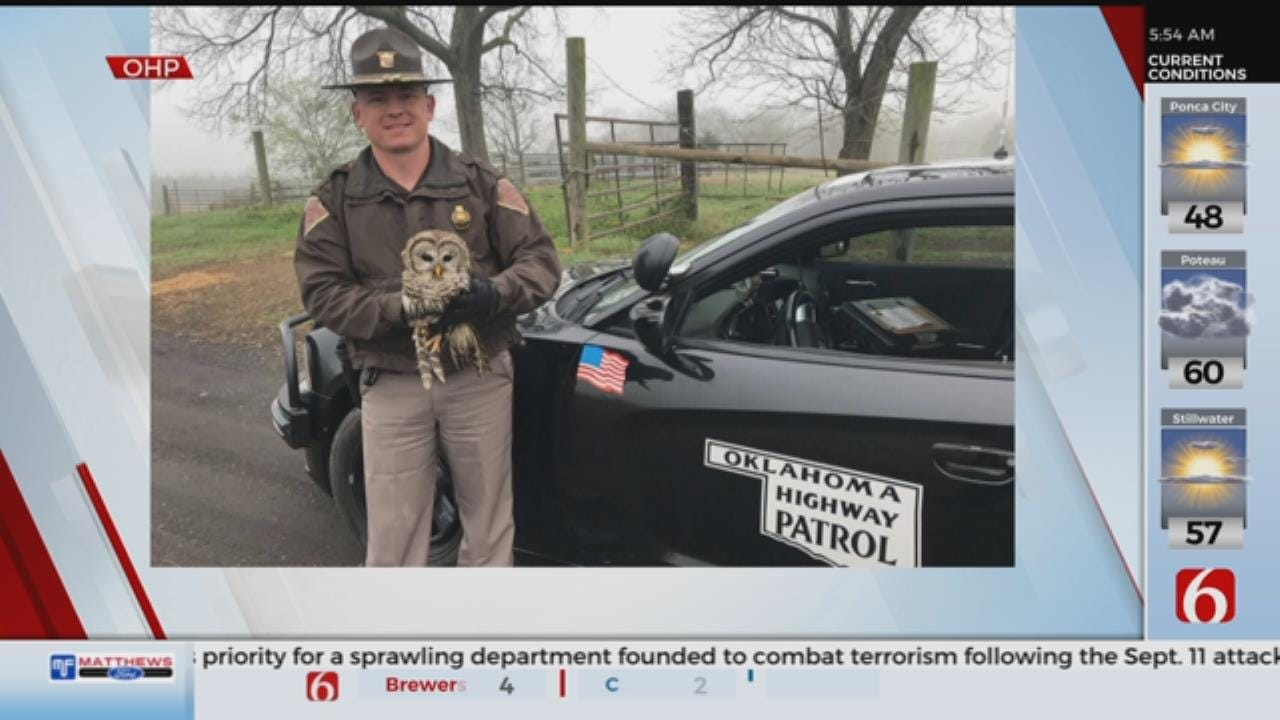 WATCH: OHP Rescues Owl