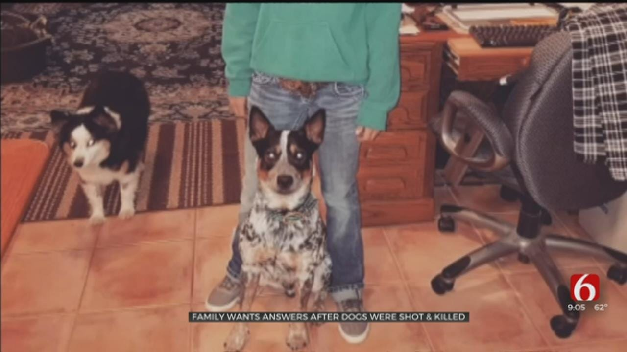 Foyil Woman Wants Answers After Dogs Found Shot And Killed