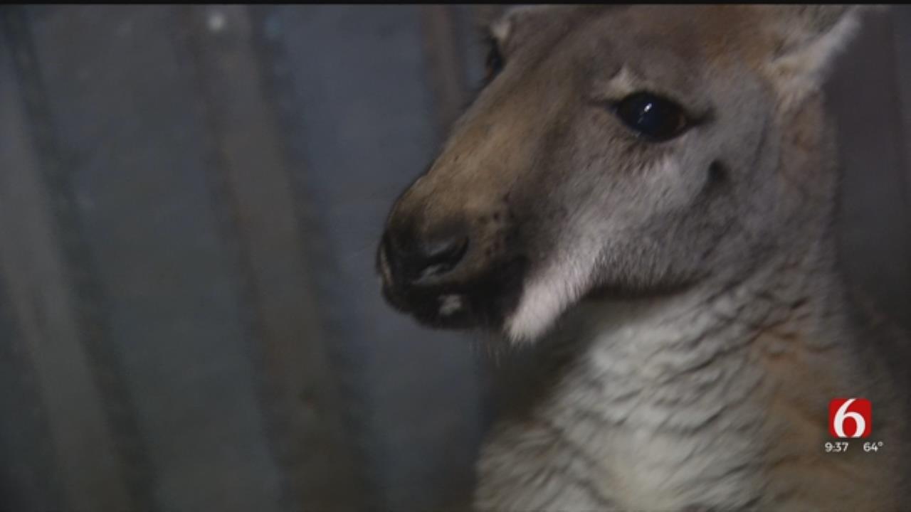 Oklahoma 'Oasis' Takes Animal Therapy To New Level