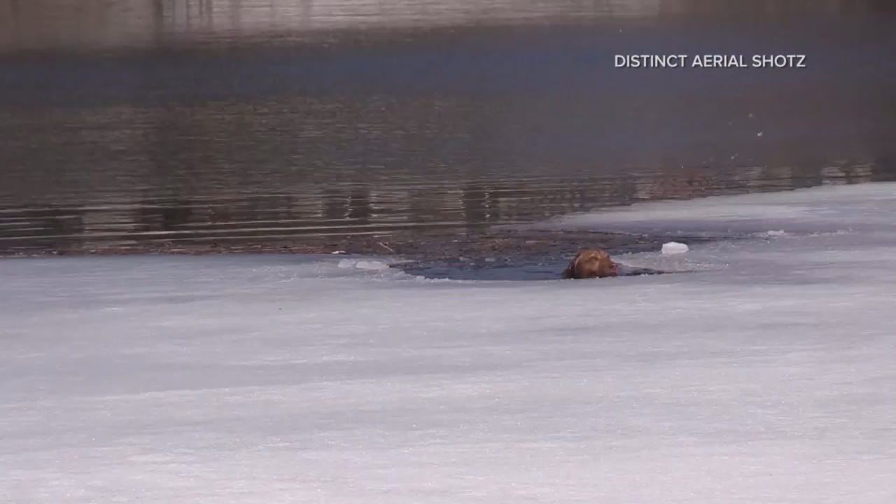 20190325 - MON0245 Caught on Cam VO Dog Rescued from Icy Water.mp4