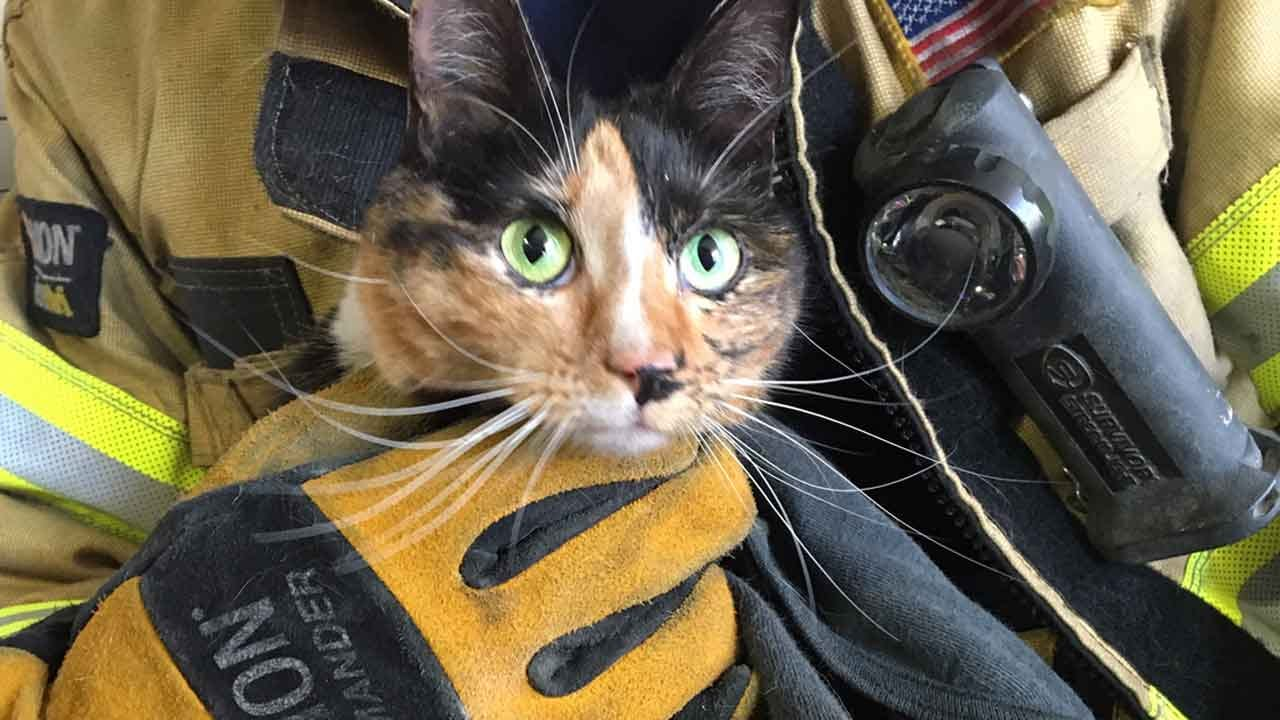 Tulsa Firefighters Rescue Cat That Hitched Ride From Mustang