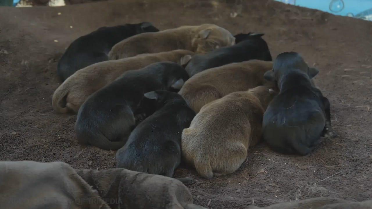 20190319 - TUE0201 Animals PKG WI Puppies Found in Dumpster.mp4