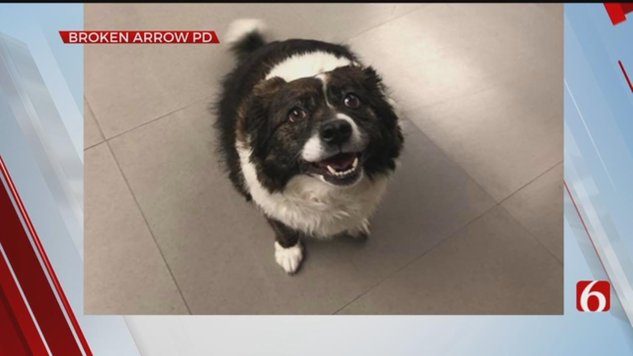 Broken Arrow Police Welcome Abby The Dispatch Dog