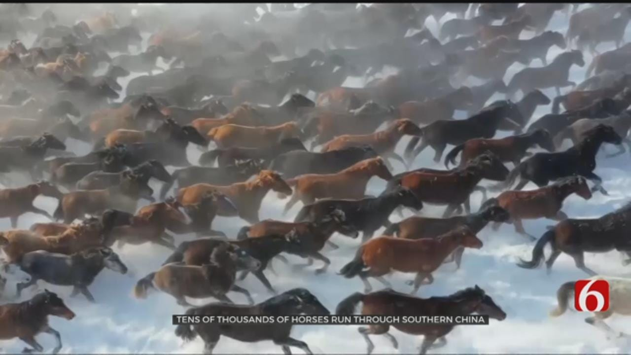 Beautiful Video: Horses From Heaven Run In China Snow