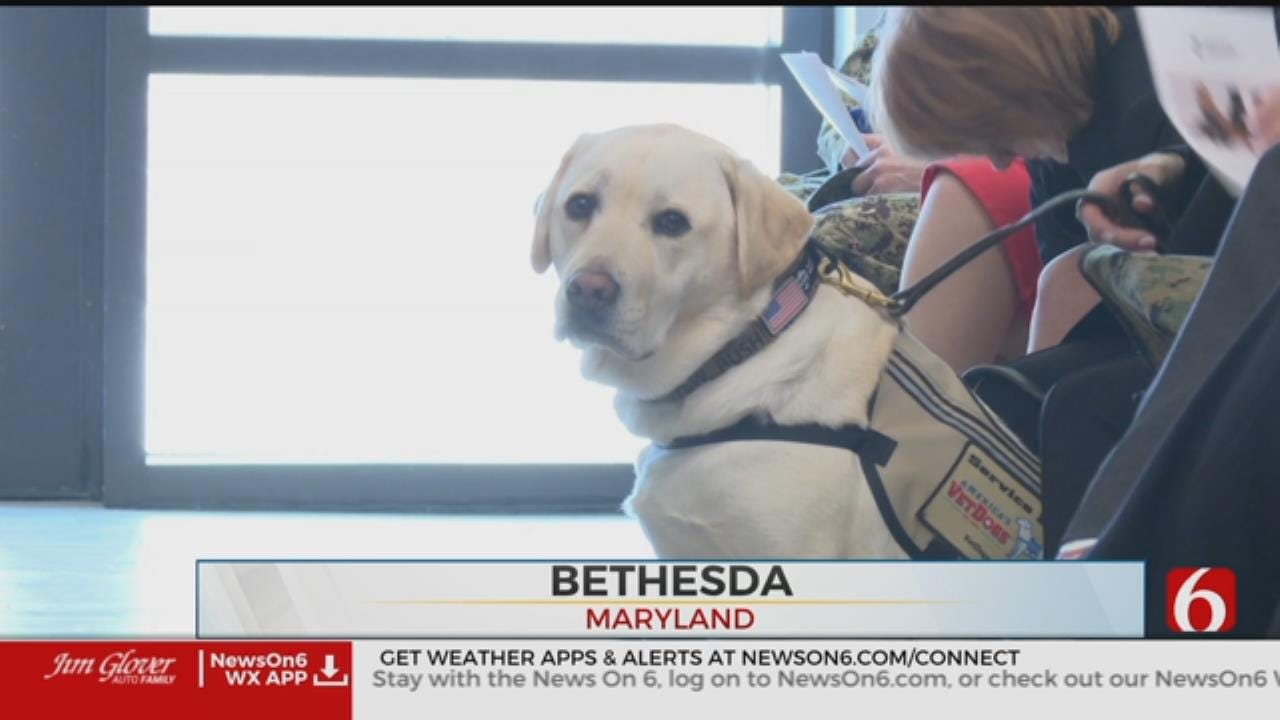 George H.W. Bush's Former Service Dog Sully Takes On New Mission