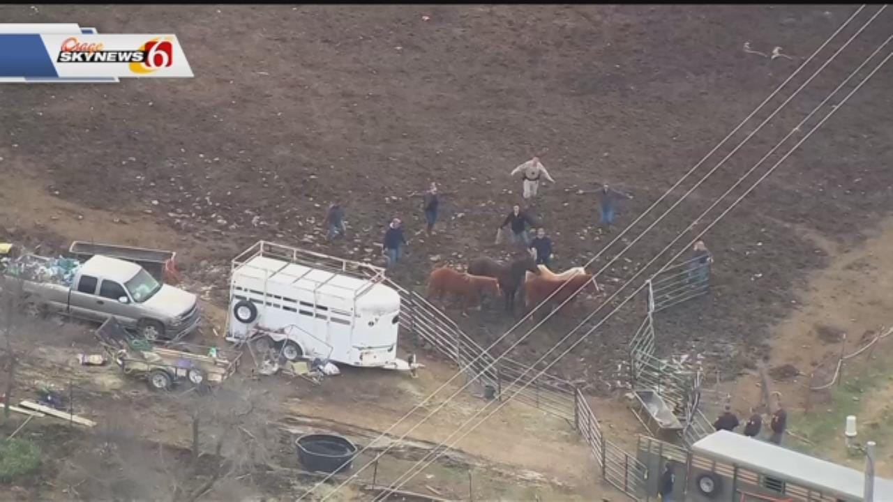 Human Society Provides Grant To Help Horses Seized In Skiatook