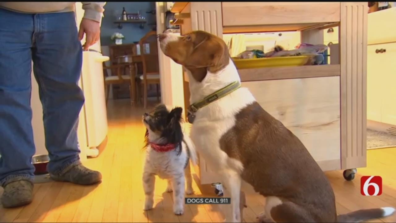 Dogs Call 911 - A Dozen Times