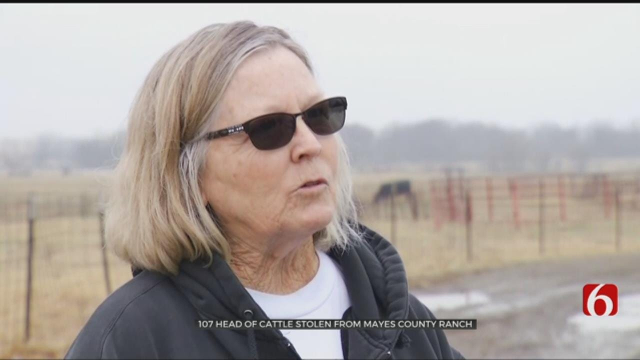 Over 100 Head Of Cattle Stolen From Oklahoma Ranch, Family Says