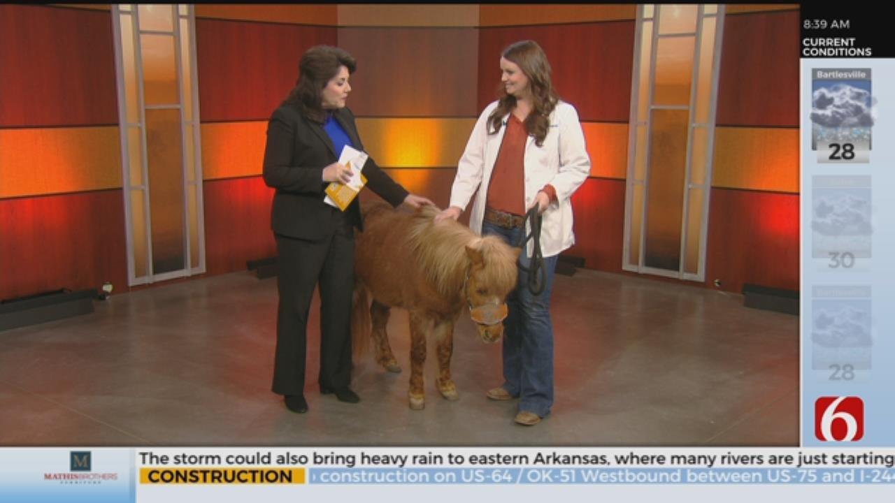 Miniature Horse Inspires New Children's Book
