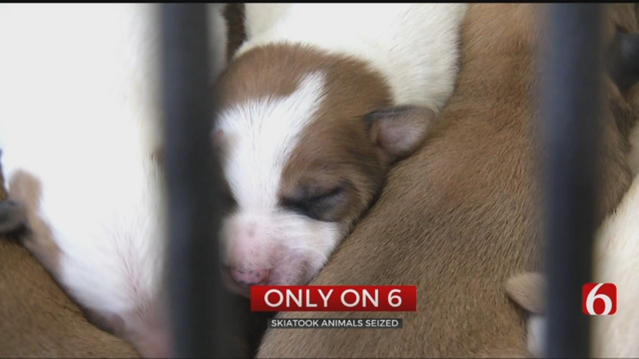 Tulsa Humane Society Caring For 19 Dogs, 1 Pig In Animal Cruelty Investigation