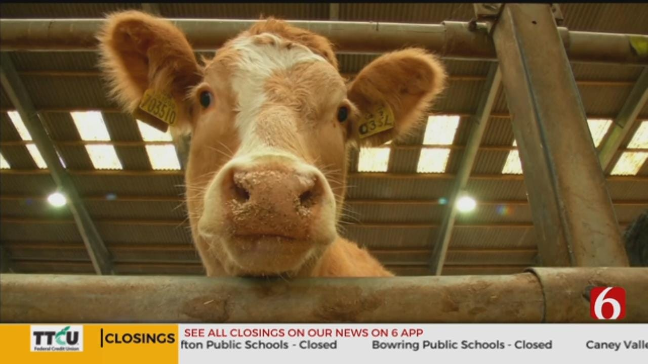 A New App Is Tinder For Cows