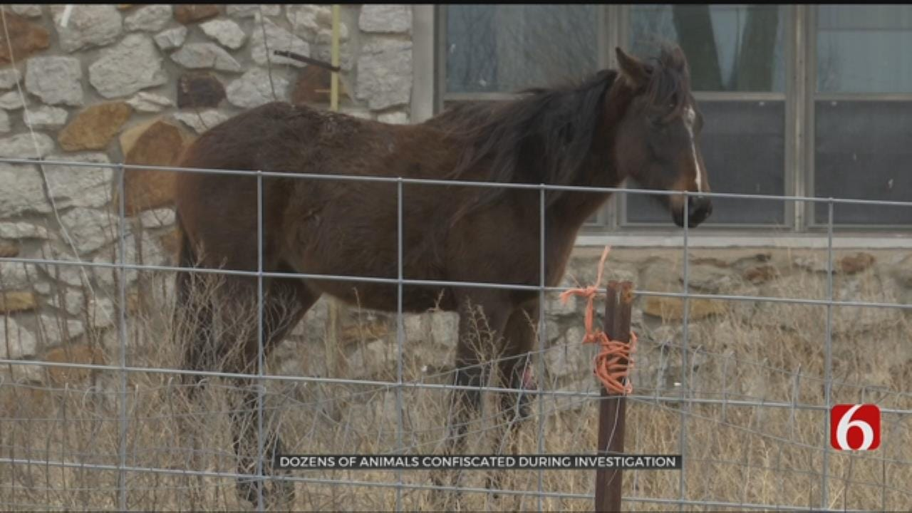 Rescue Groups Caring For Dozens Of Animals Seized In Tulsa County