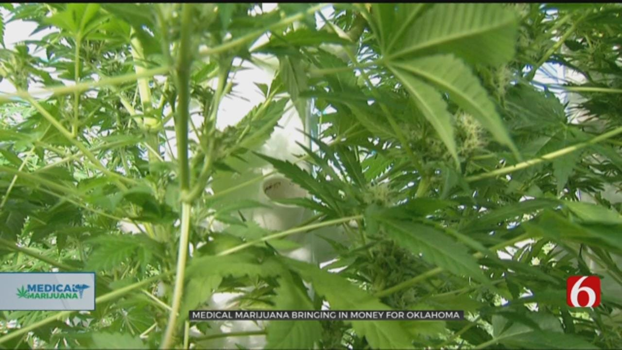 $13M Brought In From Medical Marijuana Application Fees, Authority Says