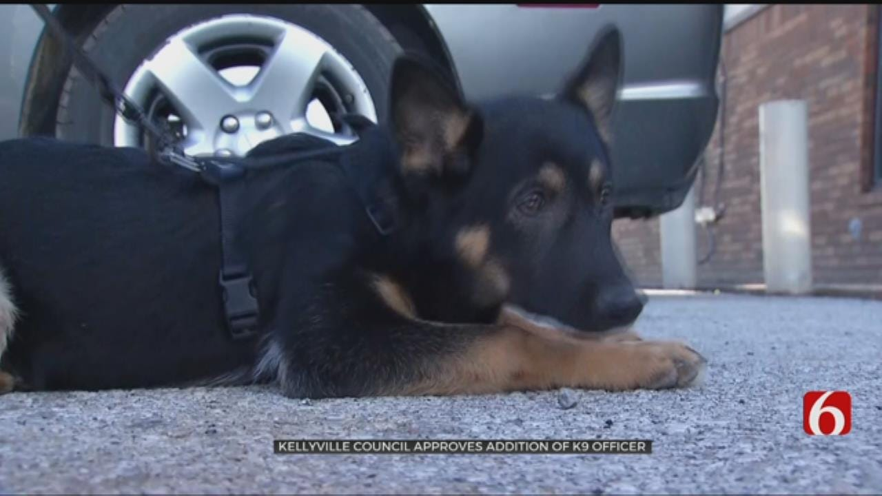 Kellyville Town Council Votes To Pay For Police K-9 Unit
