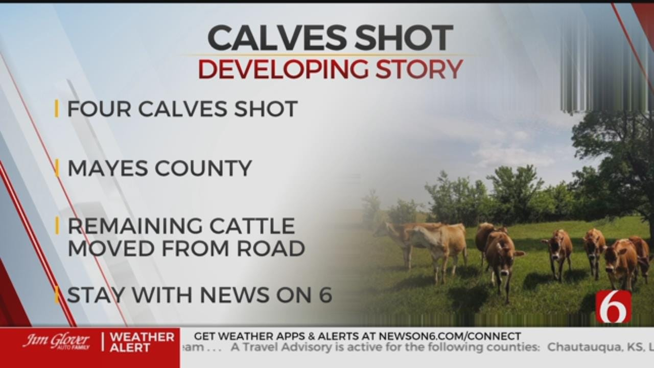 4 Calves Shot And Killed In Mayes County, Investigation Underway