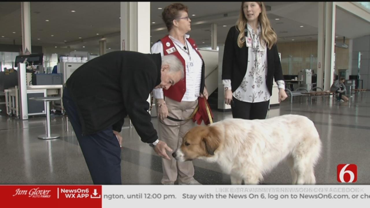 Welcome Waggin' Hopes To Relax Travelers At TIA