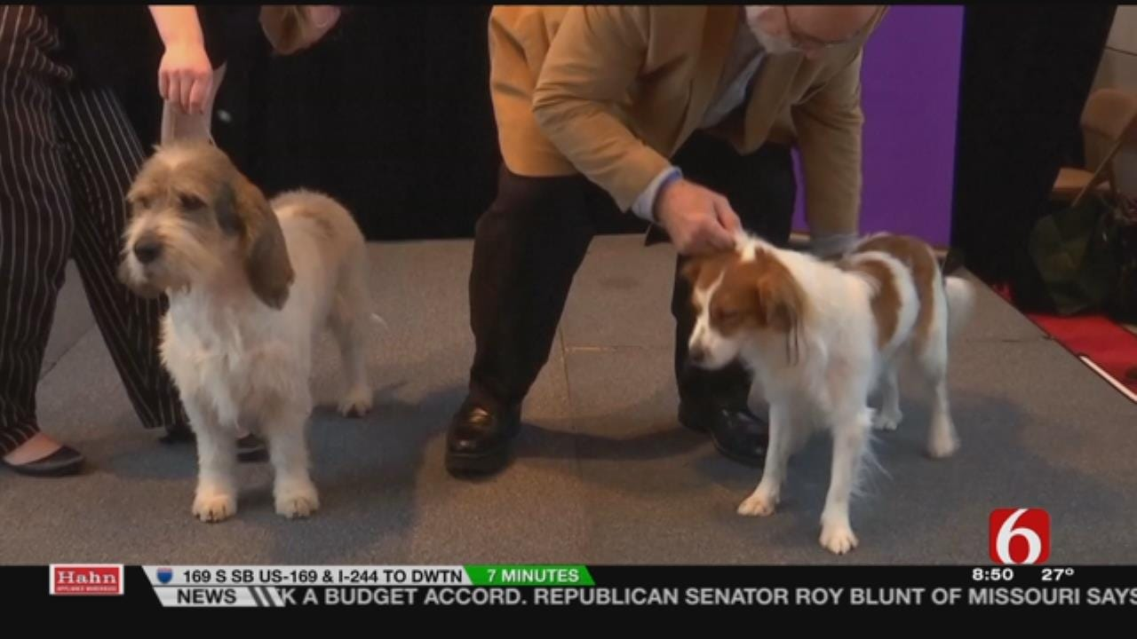 Westminster Show Welcomes 2 New Breeds, 6 In The Morning Crew Attempts Pronunciation