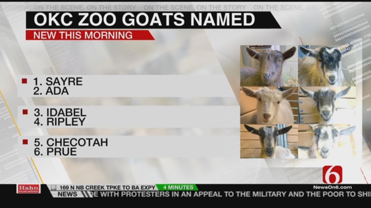 Contest Picks Names For OKC Zoo Goat