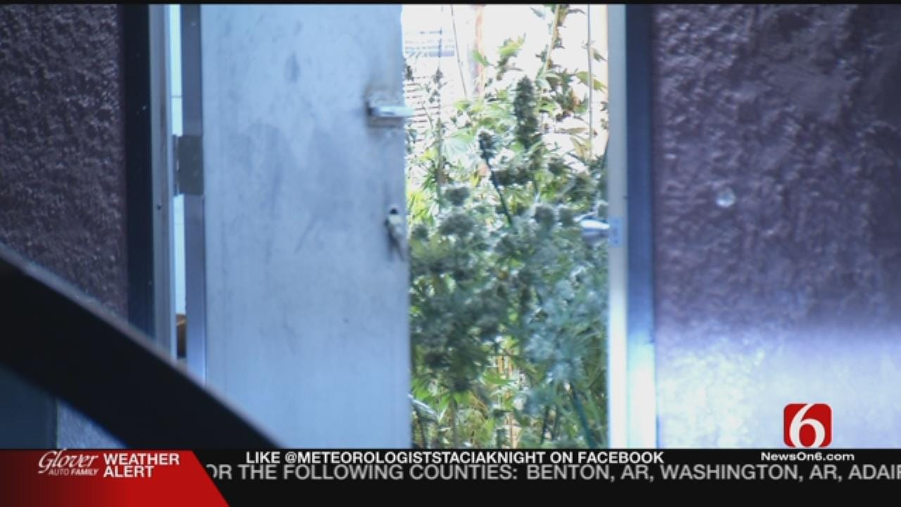Tulsa Police Frustrated By Poorly Protected Marijuana Growing Facility