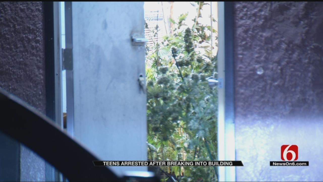 2 Teens Break Into Marijuana Growing Facility In Tulsa