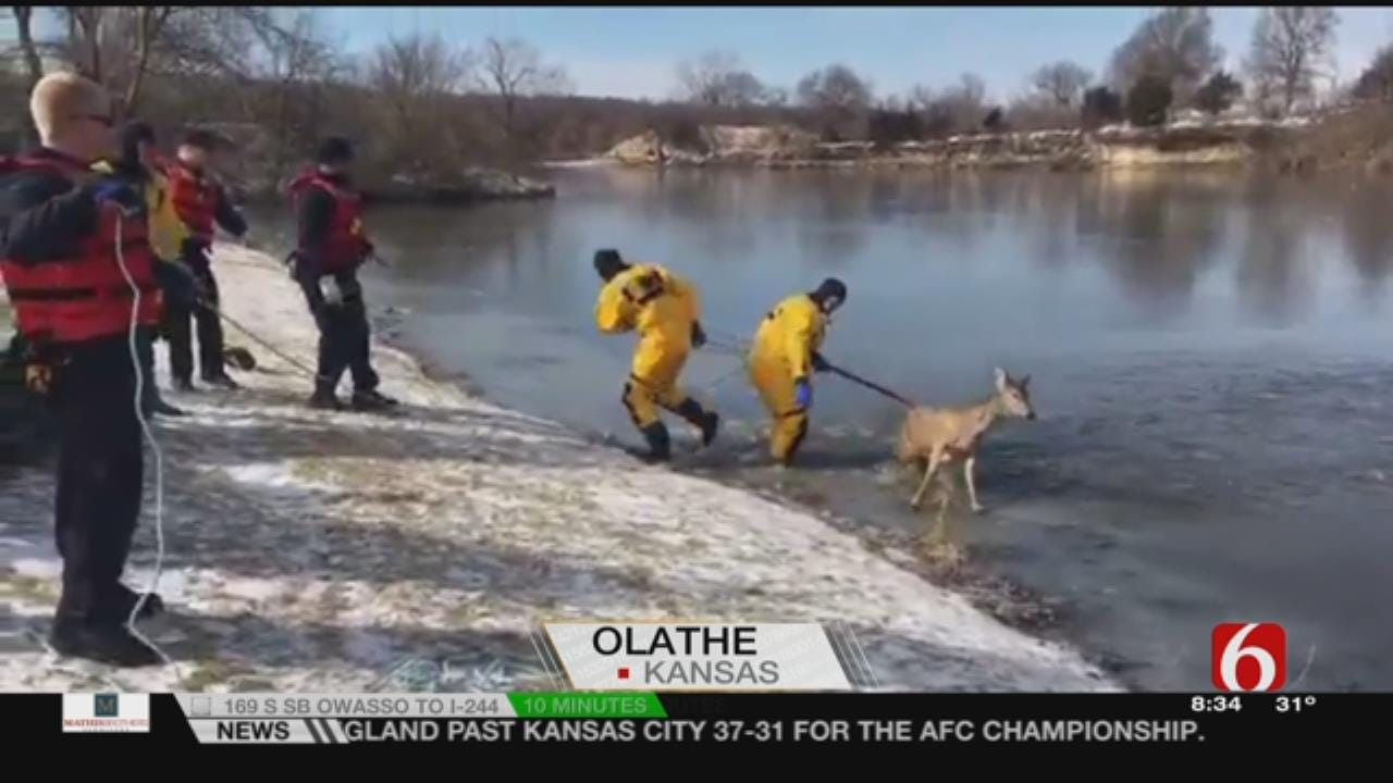 WATCH: Firefighters Rescue Deer From Frozen Lake