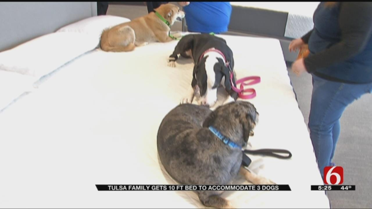 Tulsa Family Custom Orders 10-Foot-Wide Bed So Dogs Can Fit