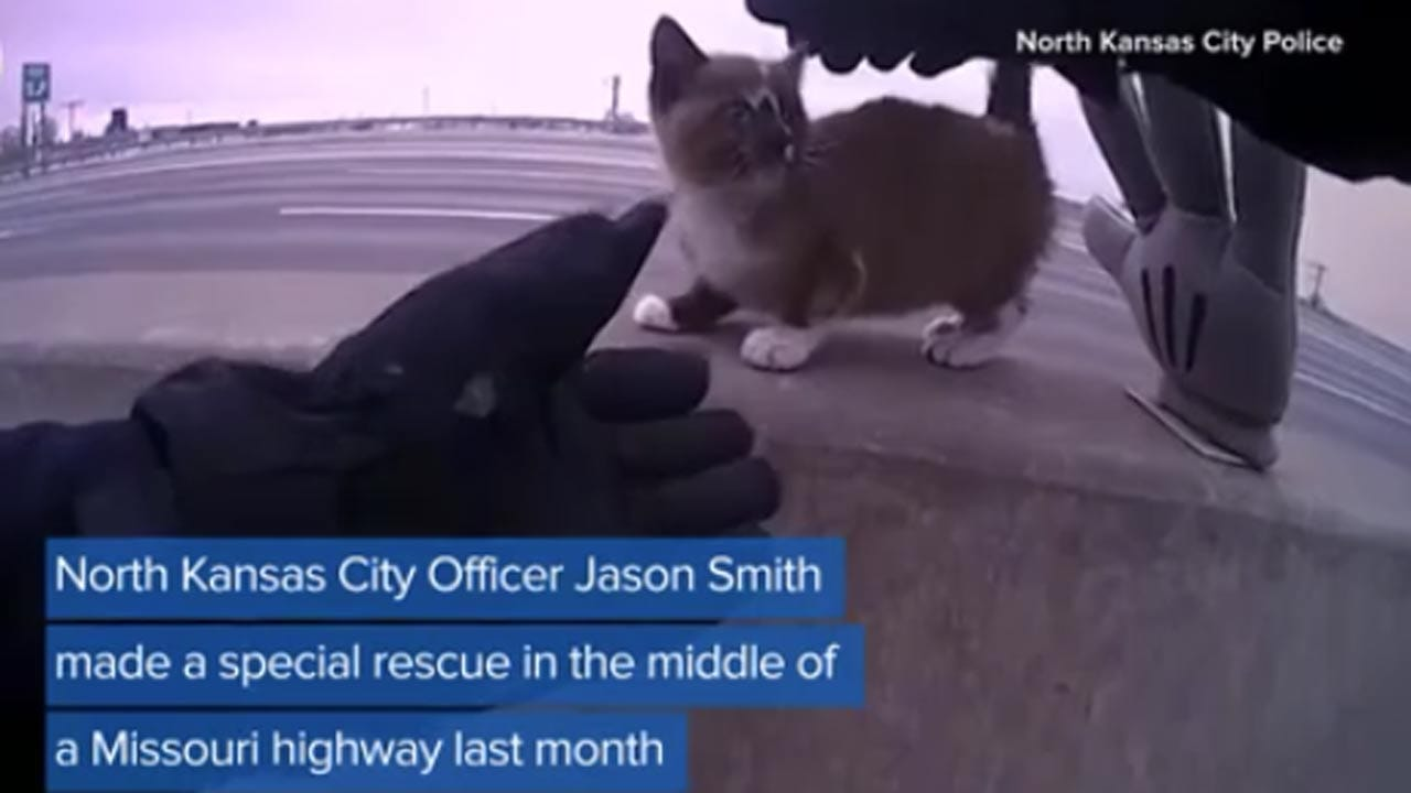Kitty Rescued From Missouri Highway