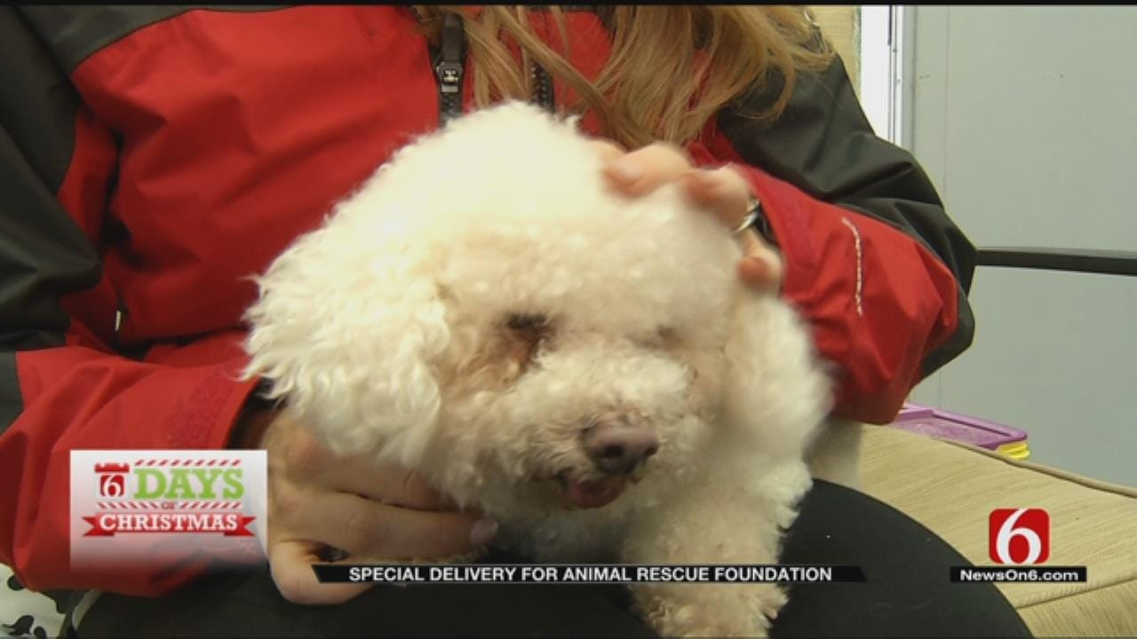 Support Homeless Pets With Animal Rescue Foundation Of Tulsa