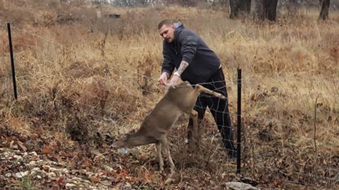California Man Helps Rescue Oklahoma Deer