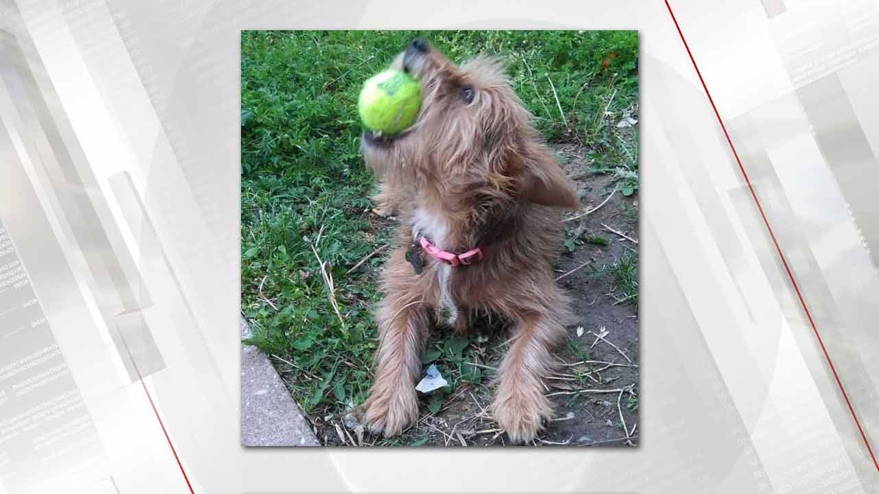 Emory Bryan: Small Dog Killed In Tulsa Home Invasion