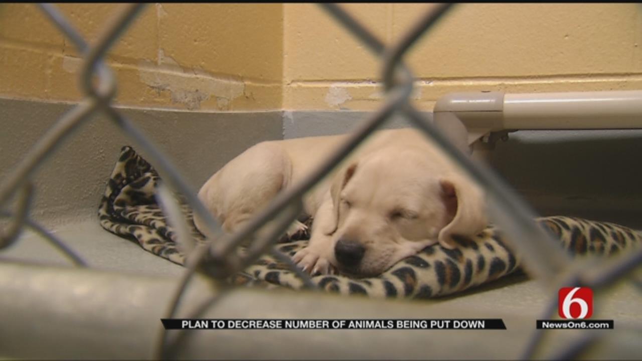 City Of Tulsa Announces Partnership To Save Animal Lives
