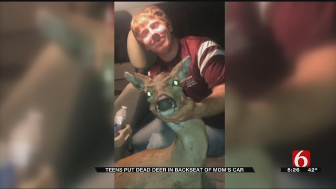 Teens Transport Dead Deer In Back Of Mom's Car