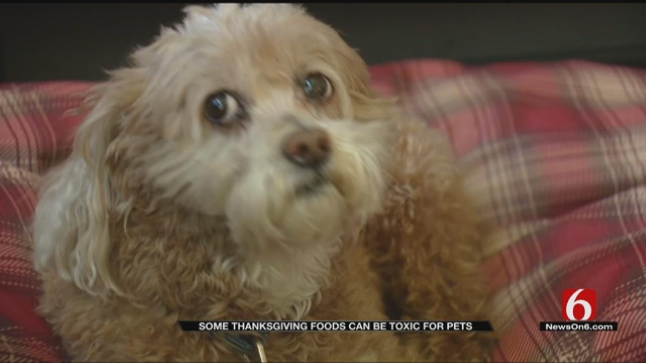 Don't Feed Your Pets Thanksgiving Dinner, Humane Society Warns