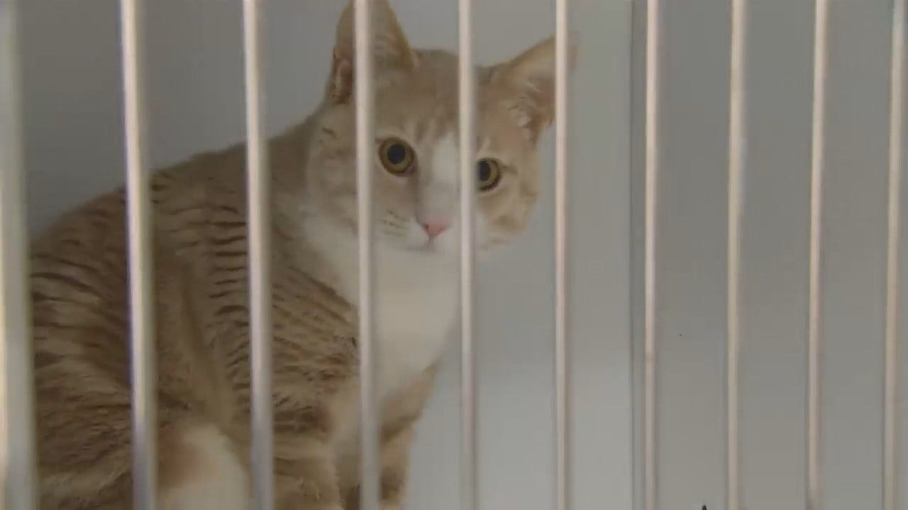 WEB EXTRA: Video Inside Tulsa's Animal Shelter